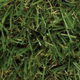Evergreen - Grün